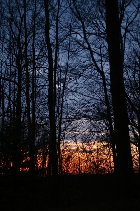 sunset-in-the-woods