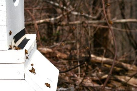 hive-entrance