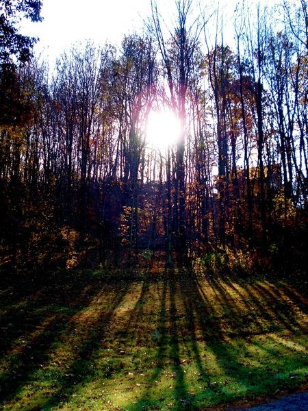 sunny-shadows