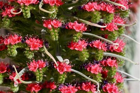 interesting-pink-flower