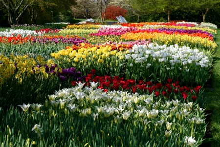 longwood-gardens-tulip-festival