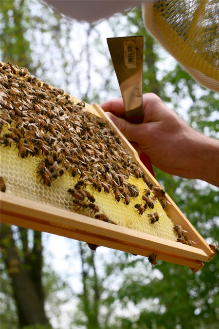 checking-out-the-frames-in-hive
