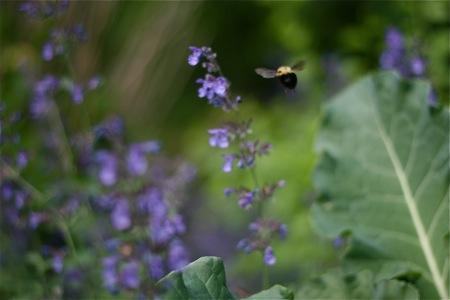 bumblebee-in-flight