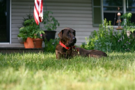 dog-in-the-grass