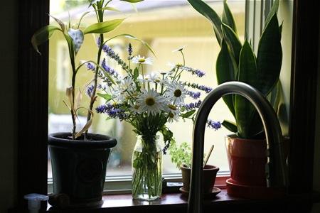 Fresh flowering in the Winder