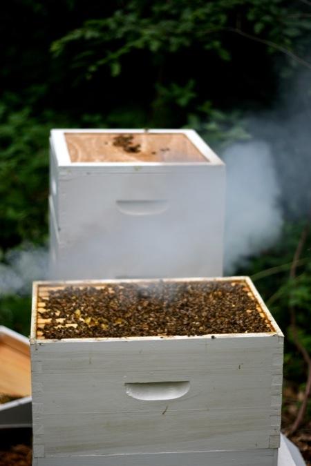 Smoking_the_beehive