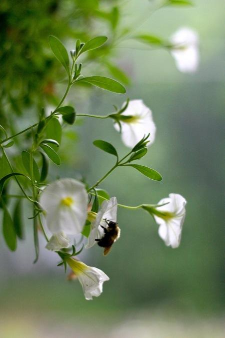 Sleeping_Bee