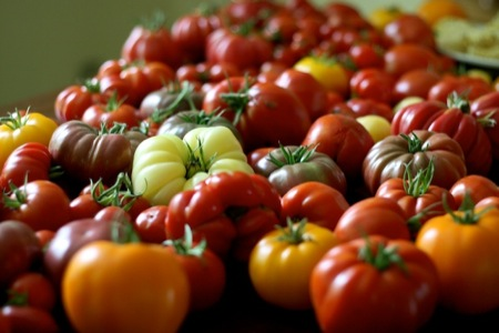 Colorful_Tomatoes