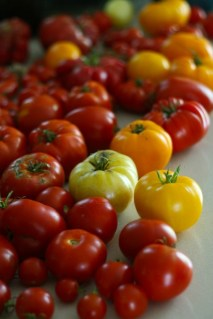 Tomatoes_on_counter