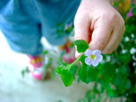 Little_hand_with_flower