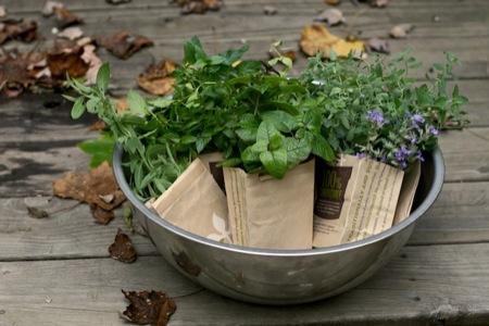 harvesting_herbs