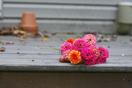 zinnias_on_porch
