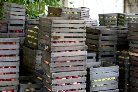 Stacked_apple_crates