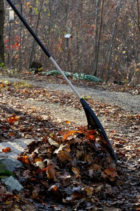 Raking_leaves
