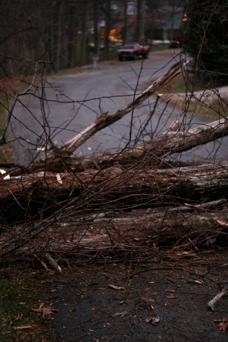 tree_fallen_on_road