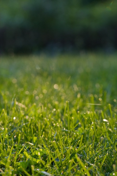 dewy_grass_at_sunset