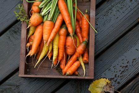 Freshly_harvested_carrots 3