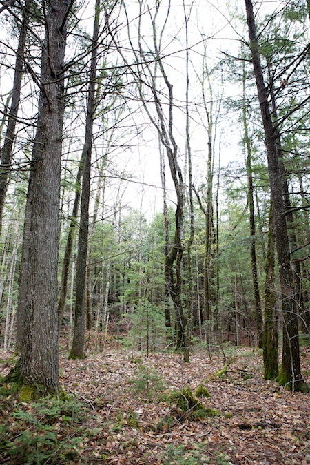 The property in Maine 4