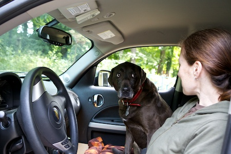 chiots in the car