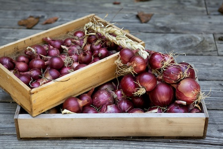 red zepellin onions 1