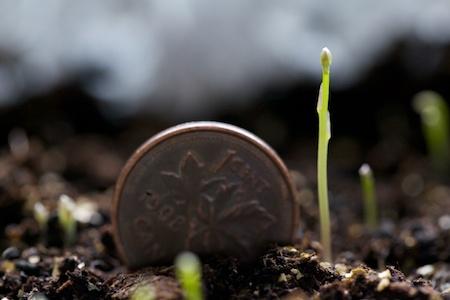 tiny asparagus seedlings 1