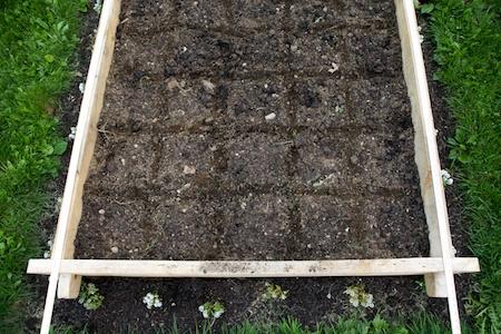 5x5 challenge garden 1