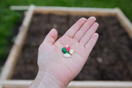 planting the 5x5 challenge garden 2