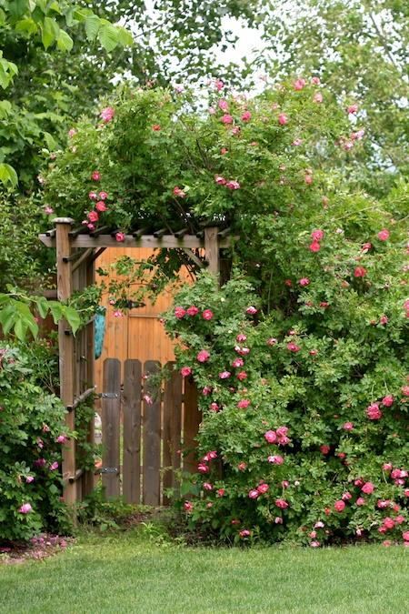 Gingers Garden 1
