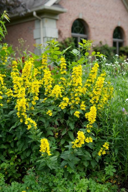 Gingers Garden 10