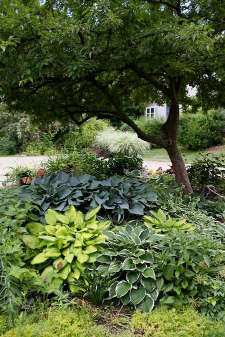 Gingers Garden 6