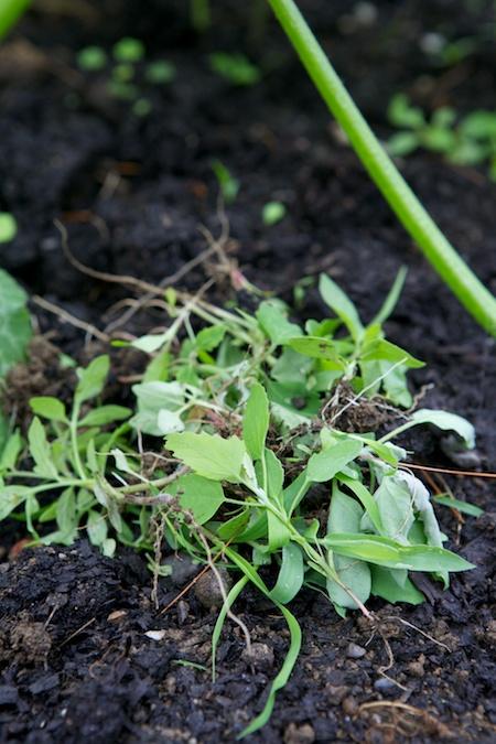 weeding the garden 2