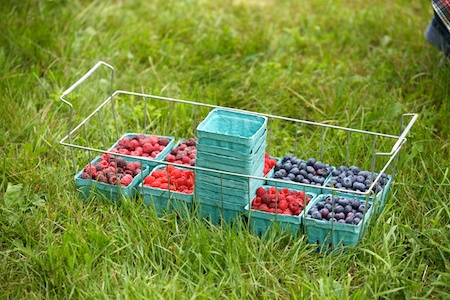 Berry Picking 7