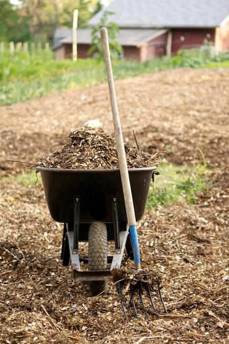 Mulching the Main Garden 3