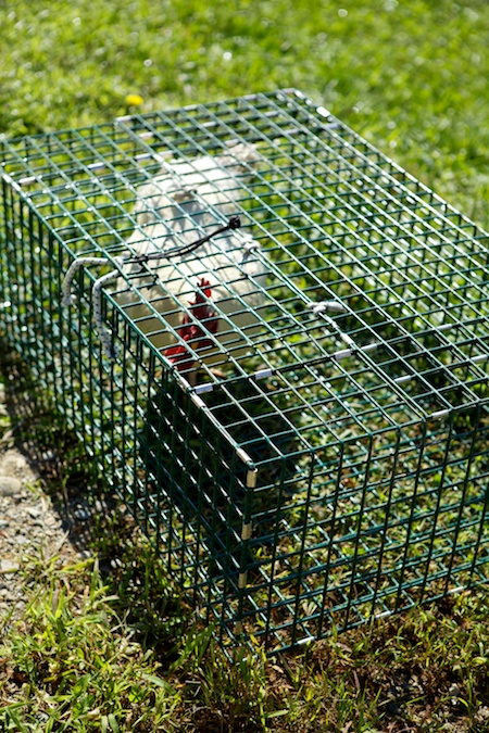 Chicken Slaughter 3