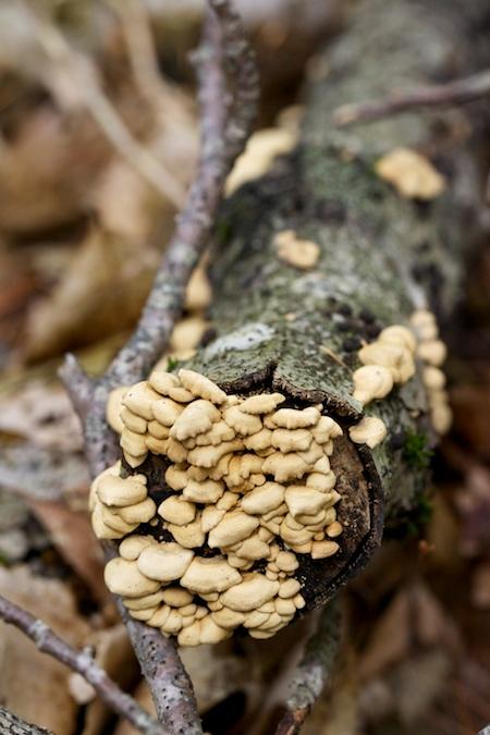 mushroom identification class 8
