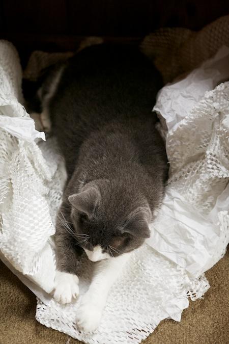 Dexter Sleeping (1)