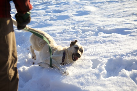 Tara in Snow 4