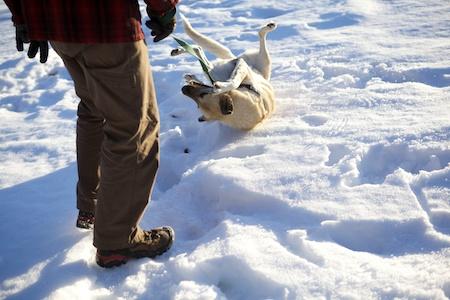 Tara in Snow 5