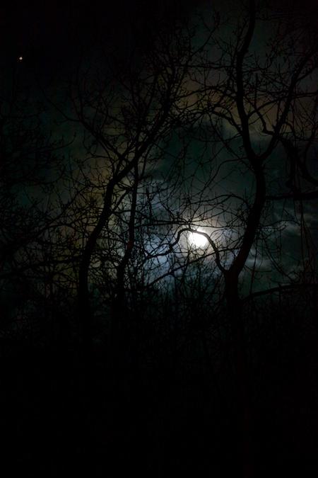 moon 1 (1)