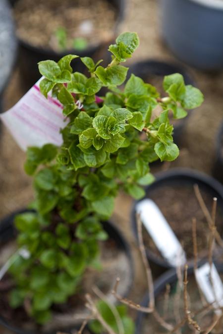 new plants 3