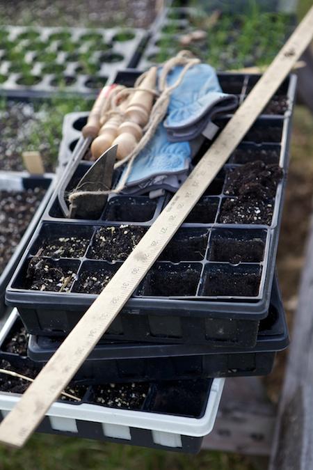 empty seed flats (1)