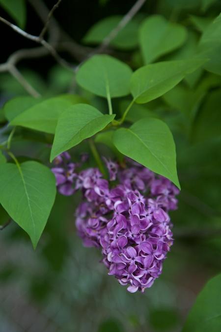 spring flowers 9