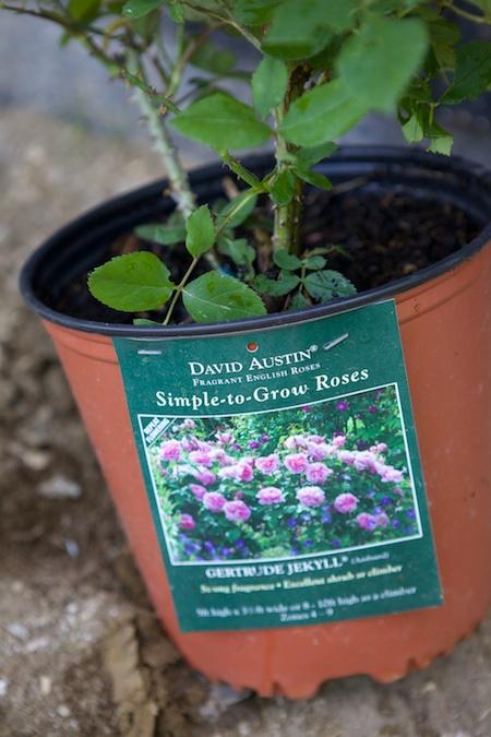 plant tags 3 (1)