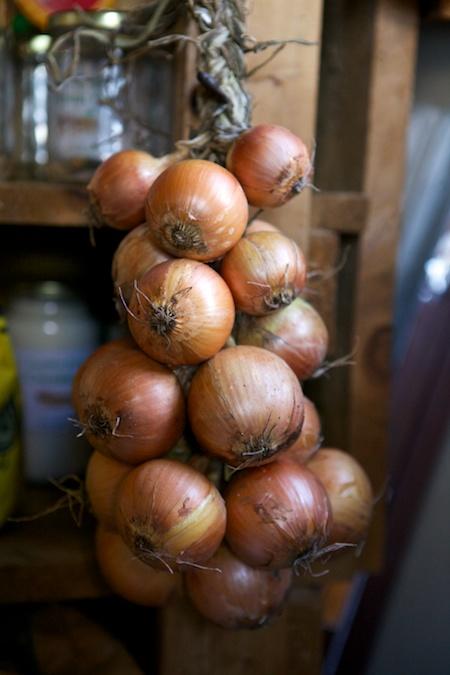 onion braids 2