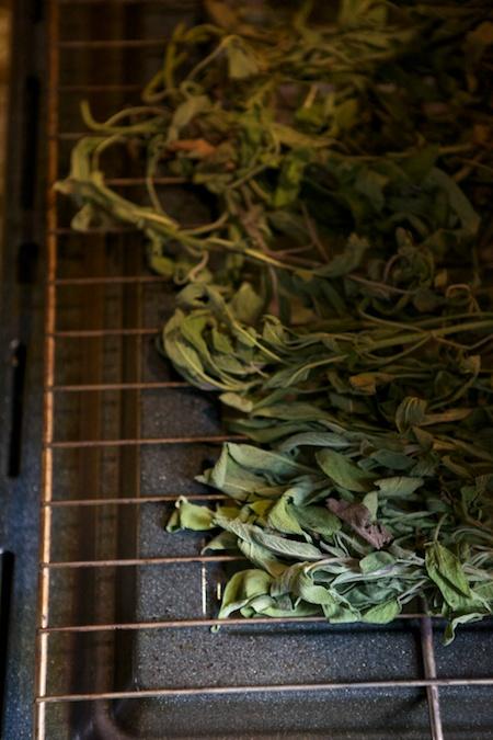 drying sage