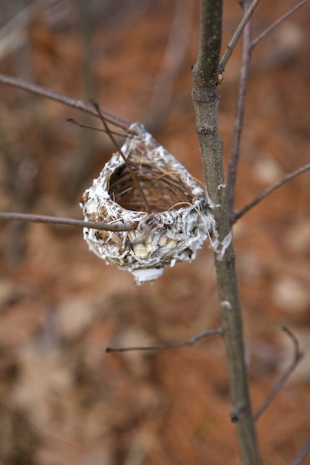 tiny Bird nest 2