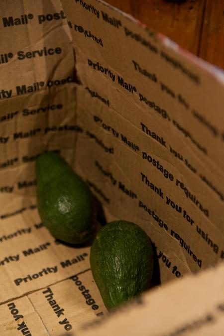 Freezing Avocados 2