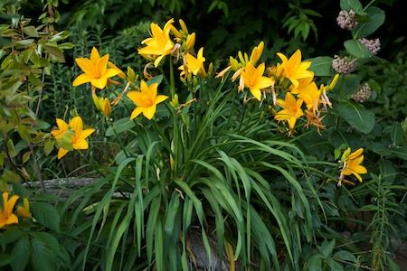 The Garden 23