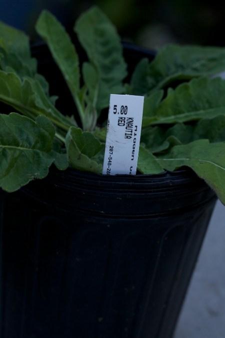 new plants from hidden gardens 13