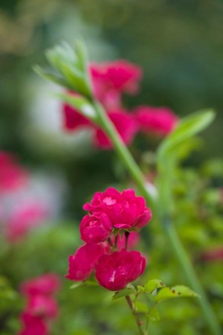 new plants from hidden gardens 4